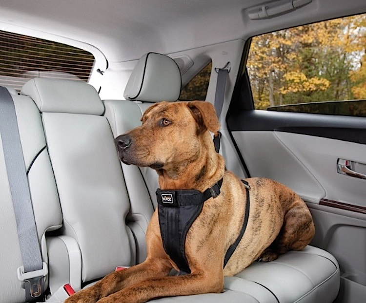 Best Dog Seat Belt >> Minivan May Be Best For Families But Not Dogs Dog Seat Belt