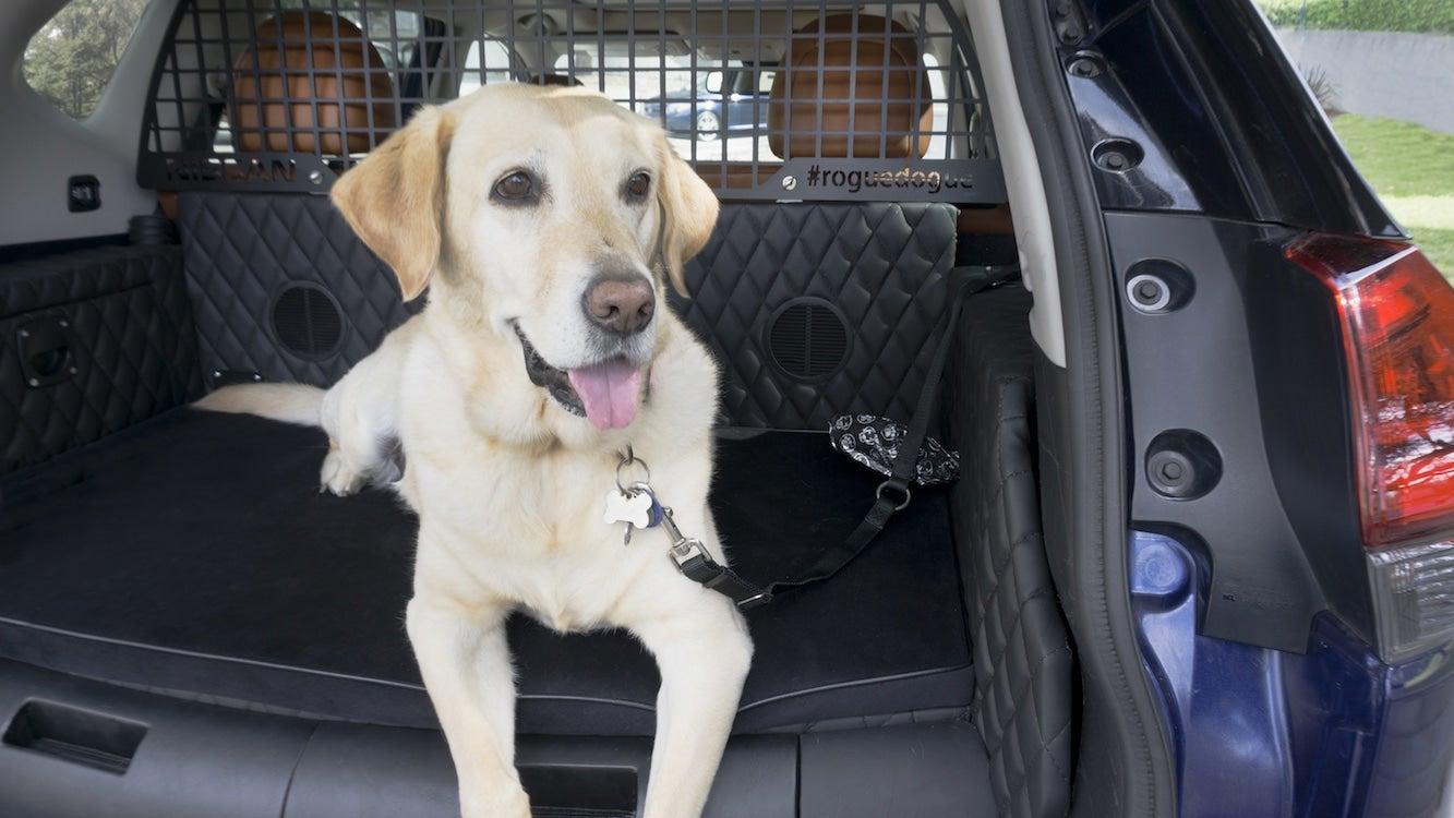 If You've Gotten a Dog, It May be Time to Get a Different Car